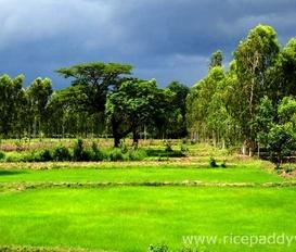 holiday villa Udon Thani