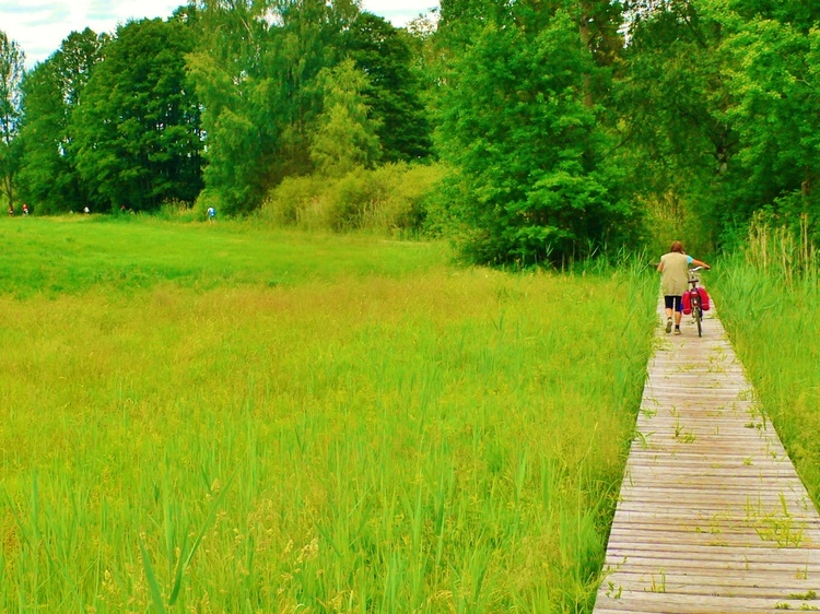 Sumpfwiesen am Silbersee
