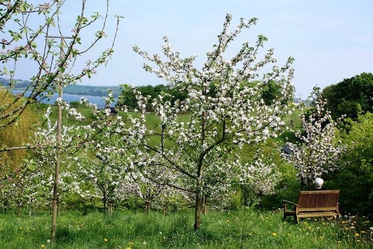 Unsere Streuobstwiese im Frühling