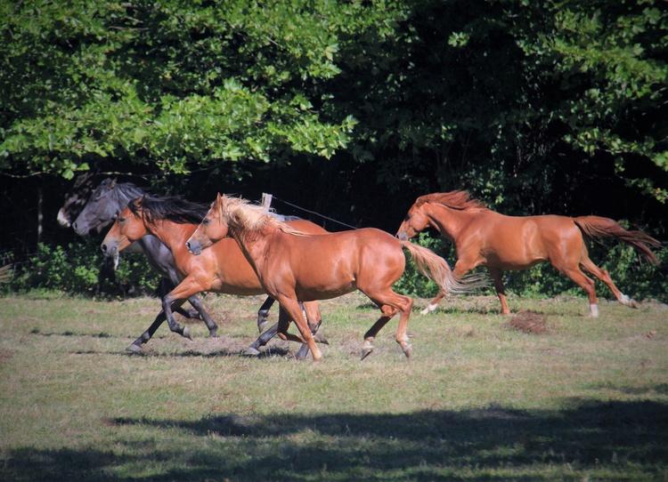 Wild horses ;)