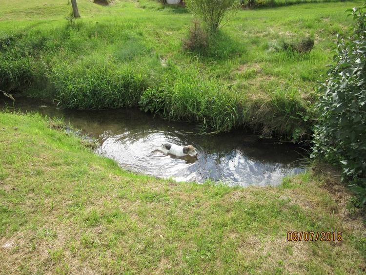 in the brook at Jivka's
