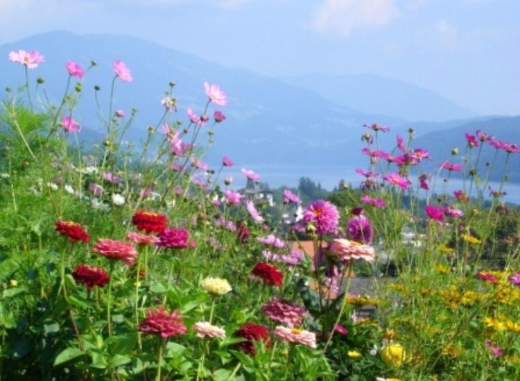 flowers an lake in charinthia