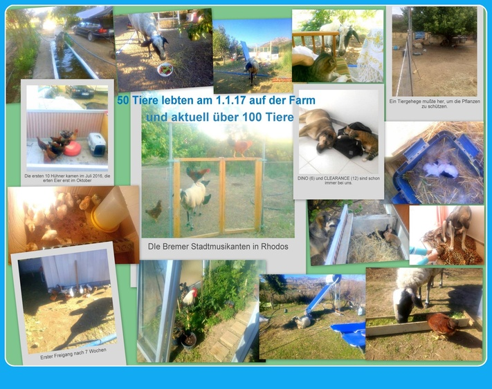 our 100 animals