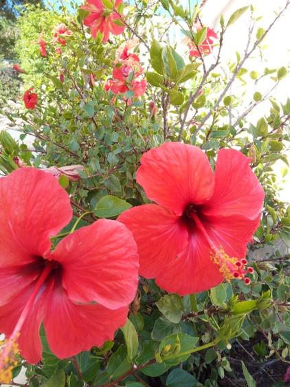 Villa Miraflores - mit vielen Blüten und Blumen
