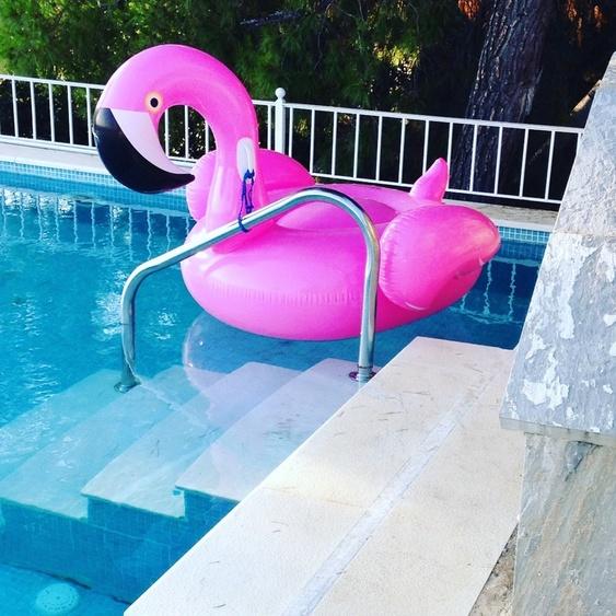 Flamingo Fieber