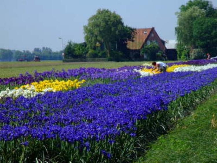 Blumenfelder im April und Mai