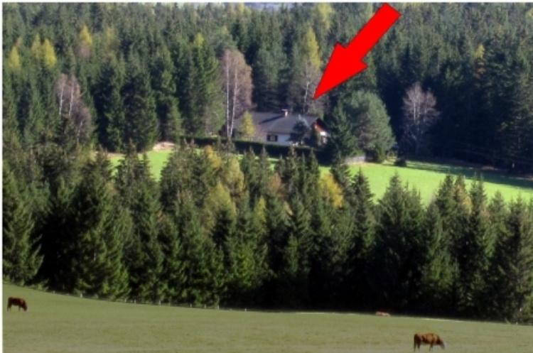 Blick von oben auf das Ferienhaus mit Areal