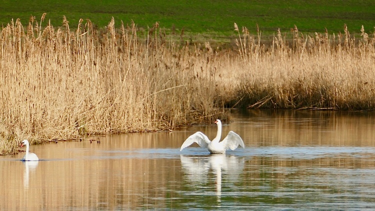 Swans, cranes and many rare birds - here you can experience them in freedom!