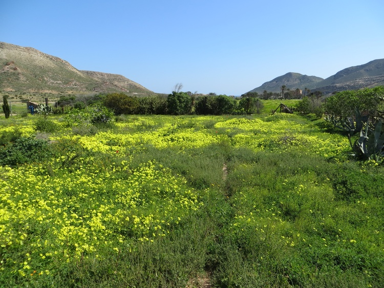 Springtime in the valley of Rodalquilar