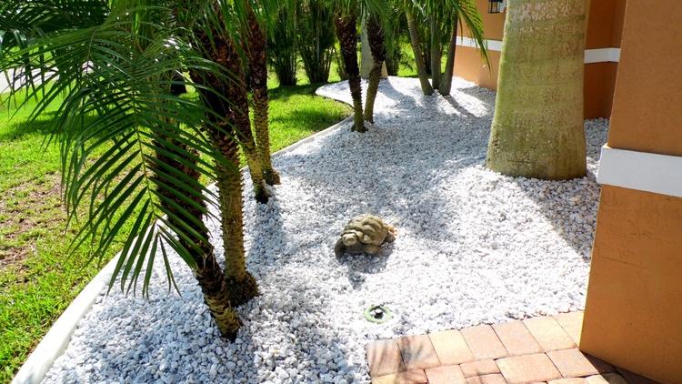 Schildkroete im Vorgarten