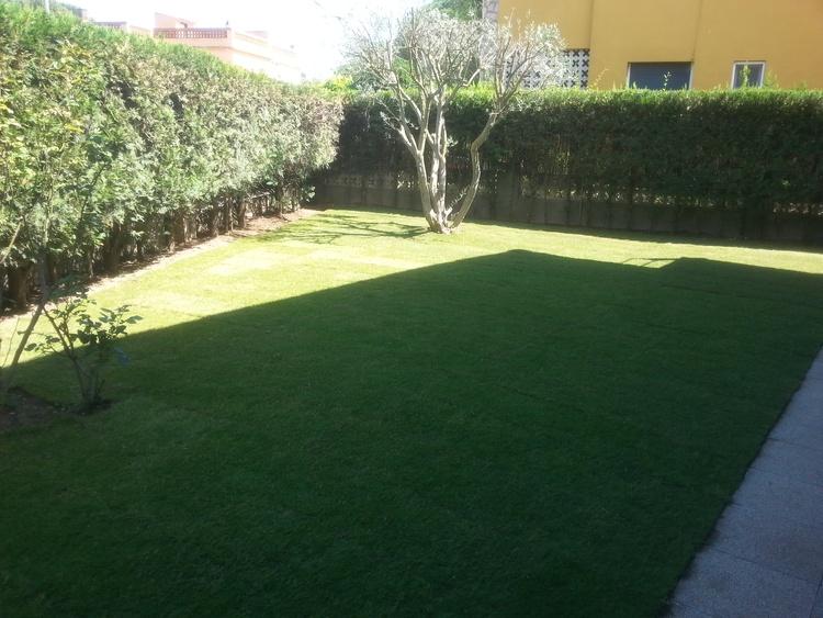 Eastside garden