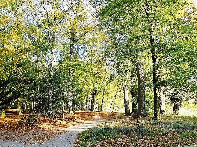 Wander- oder Radweg im Horsterwold