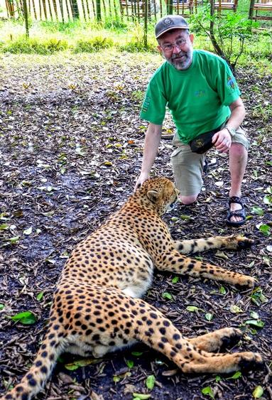 """Einer meiner drei Freunde (Gepard in der """"Inkwenkwezi-Lodge in SA"""