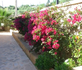 Holiday Home cala llombards