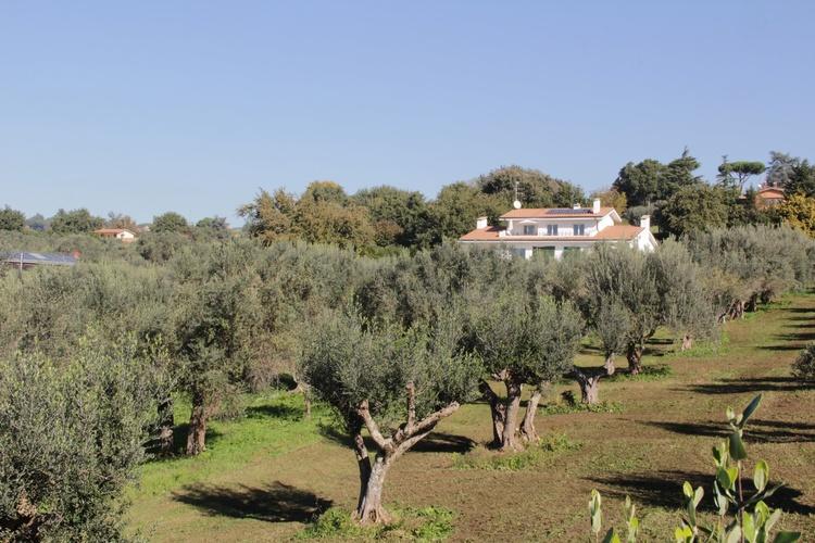 Villa Stauder in private olive grove