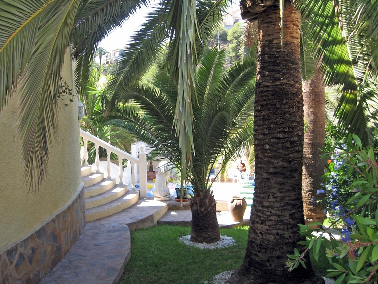 large palm garden with many tropical plants