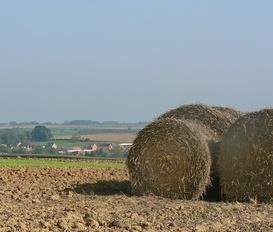 Farm Saint-Martin-sur-Ecaillon