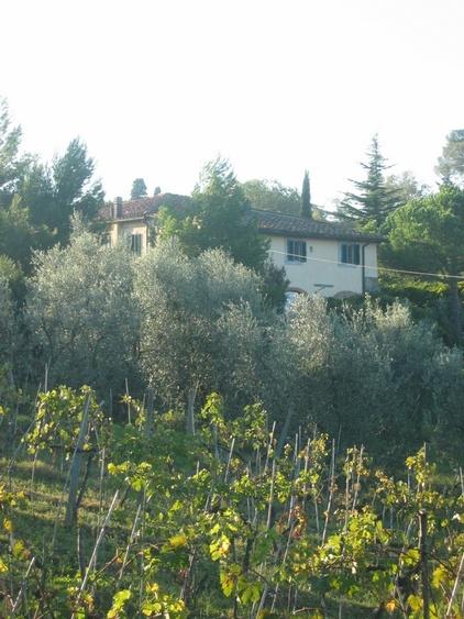 Weinberg und Olivenhain