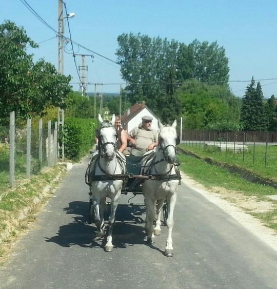 Mit der Kutsche unterwegs...