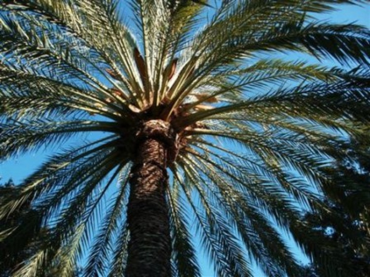 Land of palmtrees