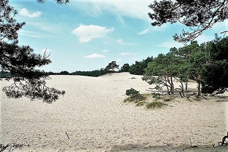 Lovely sand dunes on the Veluwe (15 km)
