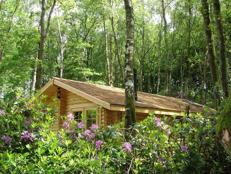 Luxury Log Cabin Nestled in Woodland