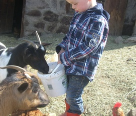 Farm Kastelruth